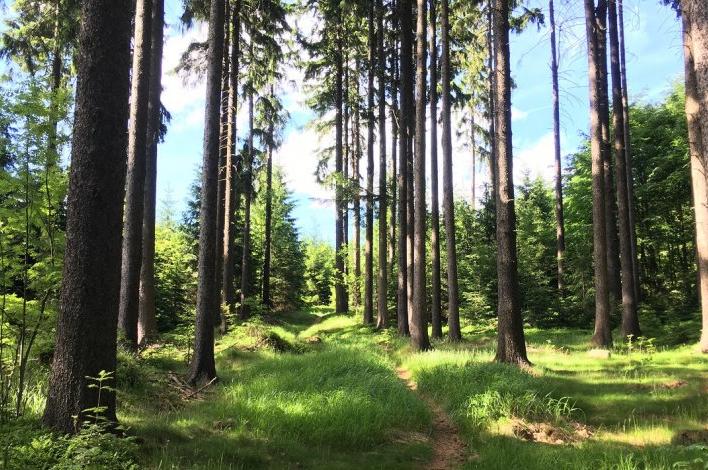 Vysočina: Bez uschlých souší je les bezpečnější